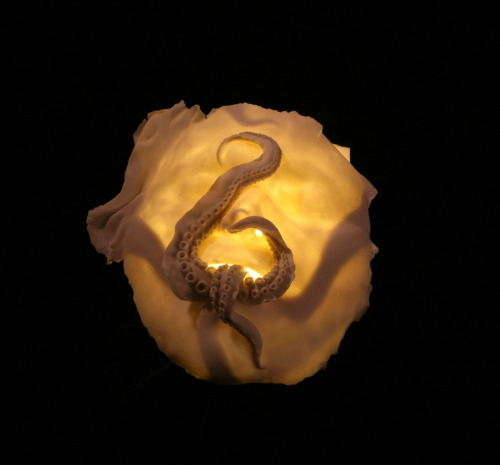 Ruth Power: Breast (Cephalophilia), 2010, 33cm wide x 34cm long x 14cm deep; porcelain, LED light, cord, plug, wooden box with black paint and flocked interior