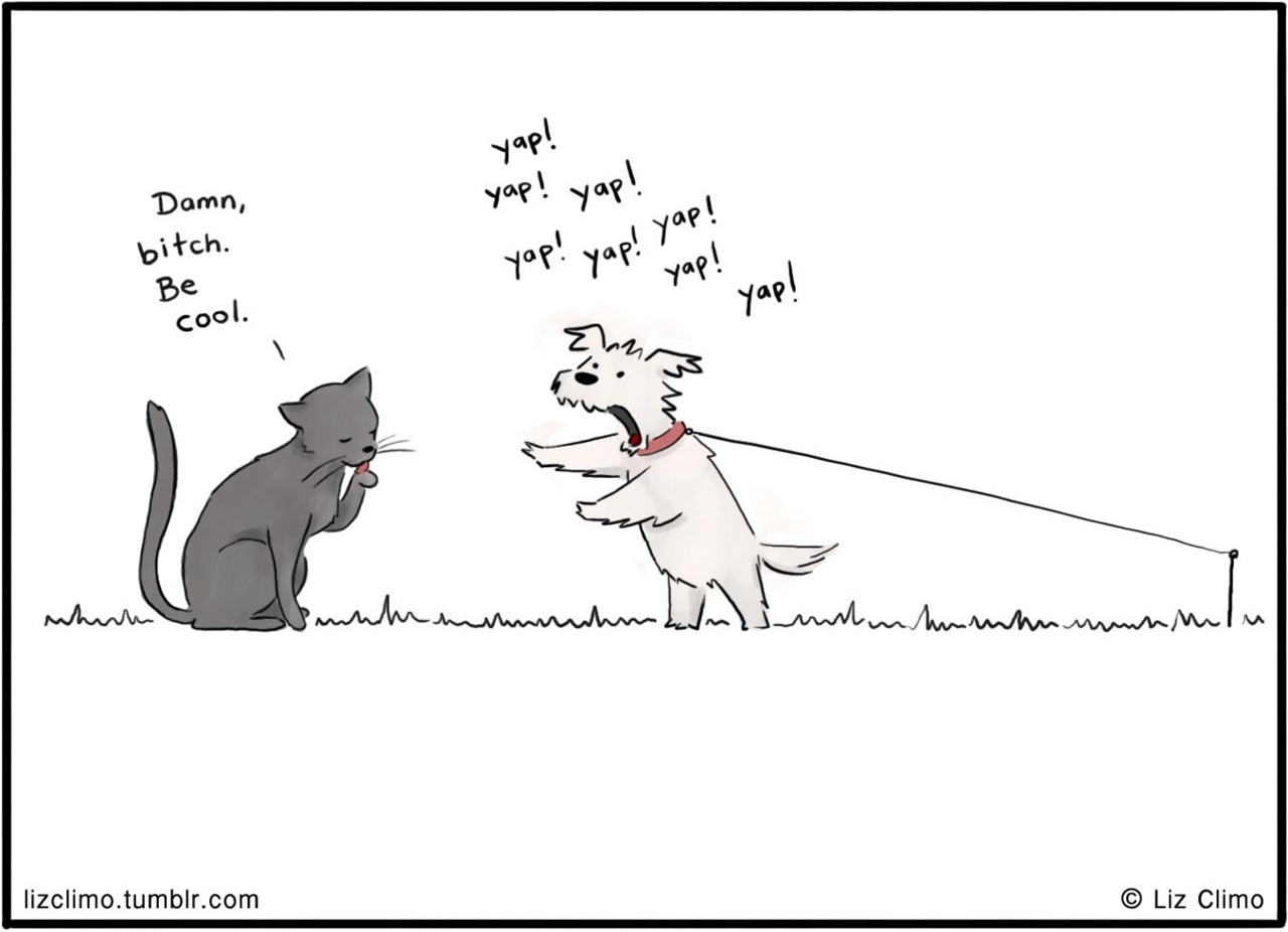 Cats & dogs  © Liz Climo