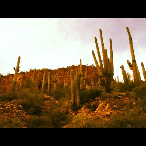 Apache Trail (Taken with instagram)