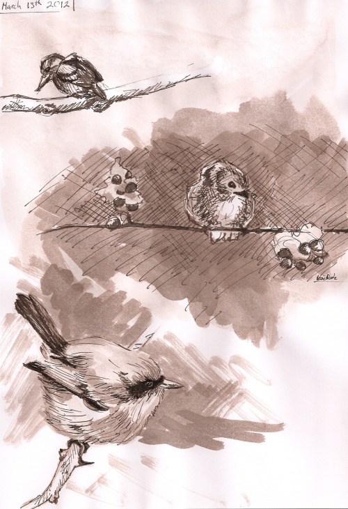 new bird sketches! sepia pen, brush, and ink! i hope you like them!