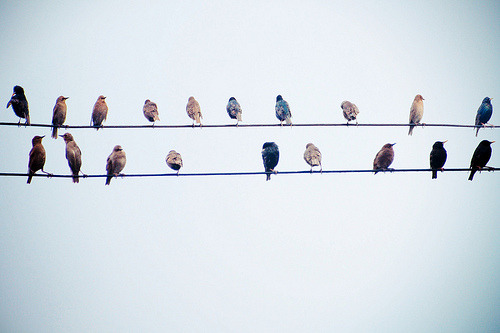 notesondesign:  birds on a wire