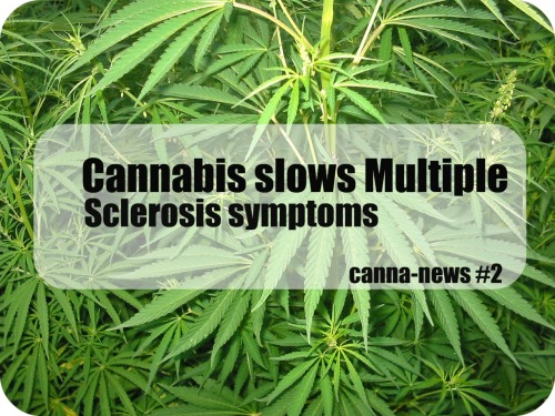 "highgirlll:  Multiple sclerosis a degenerative nerve disease effecting an estimated 250,000-350,000 Americans.A person suffering with this disease usually has symptoms that come and go suddenly. These symptoms include: Blurry/doubled vision, arm and leg weakness, muscle stiffness, memory loss, dizziness, loss of bladder control, as well as depression. Living with unpredictable symptoms such as those listed would make life a little scary, don't you think?On March 1, 2012: In Madrid, Spain, a study was done using cannabinoid agonists, or a synthetically made cannabinoid made to react with our brain and immune system's cannabinoid receptors. The study was done using mice with MS and found that administering the cannabinoid agonist ""moderated disease progression and reduced MS symptoms, including spasms and tremors.""Investigators from the University of California at San Diego also reported that ""inhaled cannabis significantly reduced objective measures of pain intensity and spasticity in patients with MS in a placebo-controlled, randomized clinical trial. Researchers concluded, ""[S]moked cannabis was superior to placebo in reducing spasticity and pain in patients with multiple sclerosis and provided some benefit beyond currently prescribed treatment.""Don't you think, with government and officials who 'care' and want to 'help' it's people, wouldn't a plant that could help people suffering from such a prominent disease, have been legalized and promoted many years ago? Cannabis grows naturally, from the ground with soil, sun, and water. Our countries pharmaceutical companies would make verylittle profit from cannabis and the patients who would be helped by it, and this is part of why it remains illegal today.spread the word, spread awareness!View my source HERE."