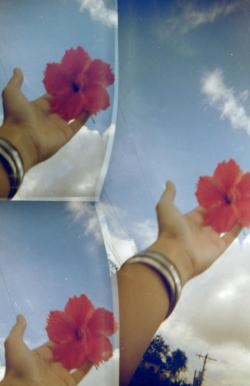 Hibiscus for the skies. Disderi 3-Lens Robot Camera Solid Gold 200 (DIY redscale) by Melancholik