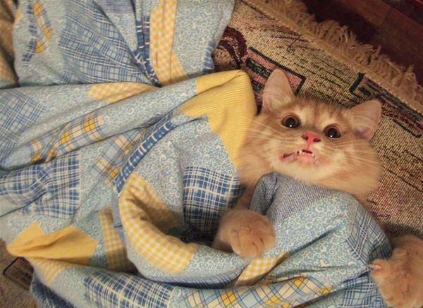 """OMG… I had a really bad dream…"" Photo via GATO"