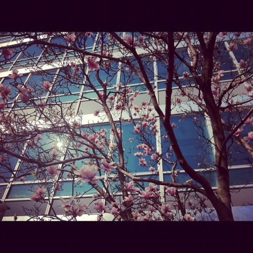 rosa baum.  (Taken with instagram)