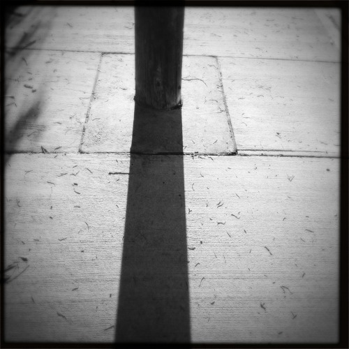 Geometric alignment.  Loftus Lens, BlacKeys SuperGrain Film, No Flash, Taken with Hipstamatic