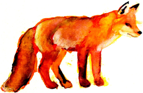 bgarbee:  fox in spring. markers/watercolors. brendan garbee I'm home from vacation