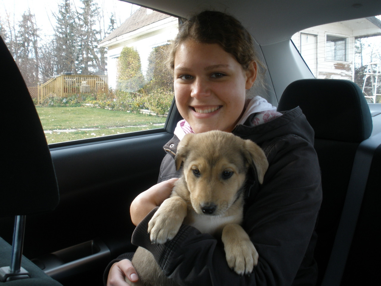 huggingdogs:  Gavin at 8 weeks, bringing him to his new home, and him now, a year and a half later.   Submitted by Carmen : supraorbital.tumblr.com  Baaaaaaw I love doggiiiiies