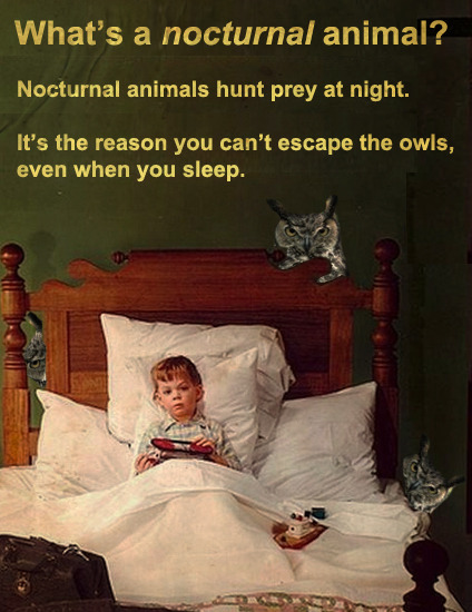 What's A Nocturnal Animal?