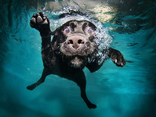 barbieqk:  canadianapplejuice:  Photos of dogs taken just as they land in water. Source [x]  hahah