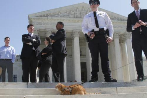 Here's a cat on a leash on the steps of the Supreme Court outside the health care reform hearings today. -Jody, BL Show- (h/t Jessica Marcy)
