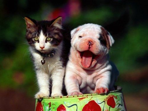 Cute Cats and Dogs Together! See more.