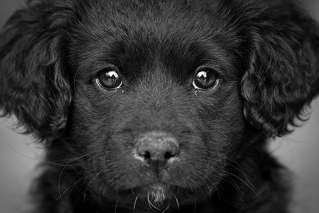 Through the eyes of a puppy by macropoulos on Flickr.