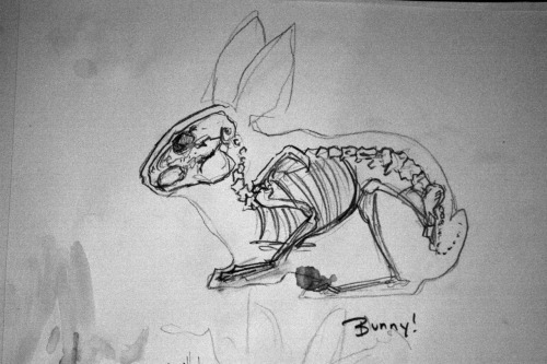 Bunny Skeleton February 27th 2012