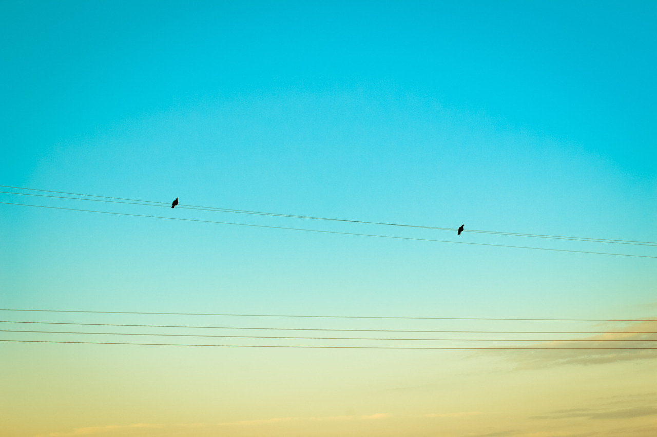 [two birds] credit: me.