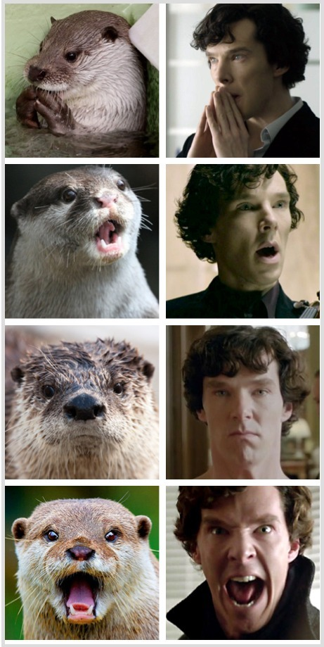 Sherlock… And his pet otter…