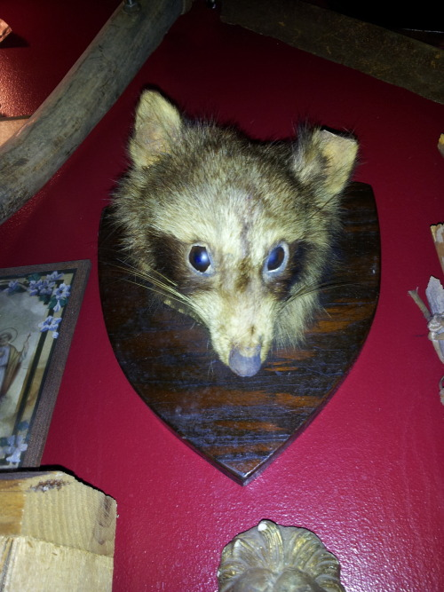 We love fucked up  taxidermy so much better than well done taxidermy.