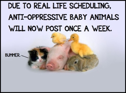 DUE TO REAL LIFE SCHEDULING, ANTI-OPPRESSIVE BABY ANIMALS WILL NOW POST ONCE A WEEK.