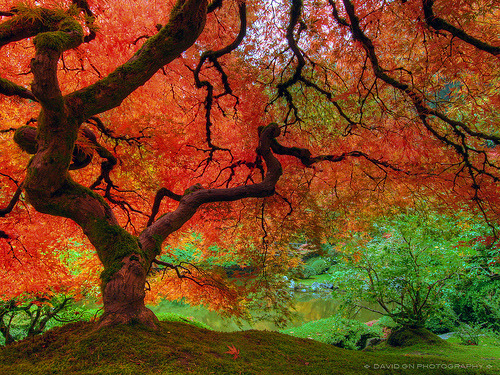 woodendreams:  (by David Gn Photography)  The beautiful vibrancy of nature.