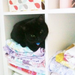 Morning! What have you lost? Um you 🐱 #fabric #shelves #ikea #vintage #cat #neko  (Taken with instagram)
