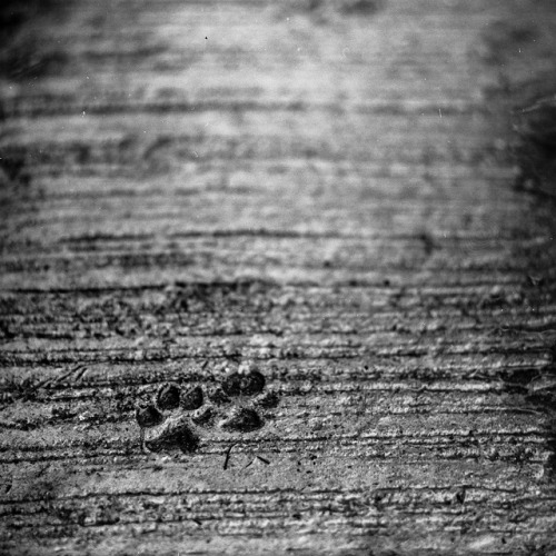 little footprints on Flickr.