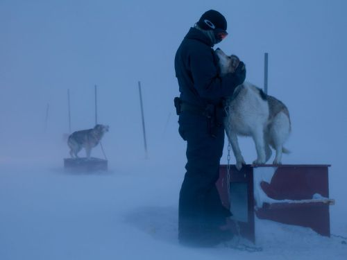 Sled Dogs, Greenland - Photograph Fritz Hoffmann