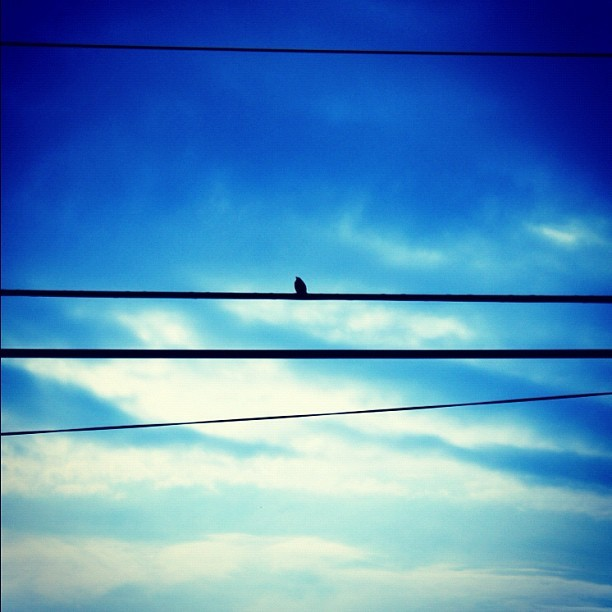 Enjoying the sun. #old #xs #rebel #bird #wire #powerline #sky #blue #clouds #phil4all #summer #sun #shadow #outline  (Taken with instagram)