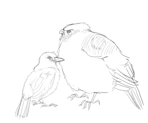 "lintufriikki:  nappi:  The Russian Heavybird and German Doctorbird have a peculiar relationship - they form a close bond and live in a near symbiosis.  Their singing is very easy to identify: ""po-po-po-pooo-pooo-dsssrrrp-dsssrp"" ""raau-rau-raau-sssrrr-ssrr-""  I know I got carried away. A combined request thingy for lintufriikki and ms-ashri  holy fuck.  sos i cna't breathejkgnjjakenmk. nappi i love you."