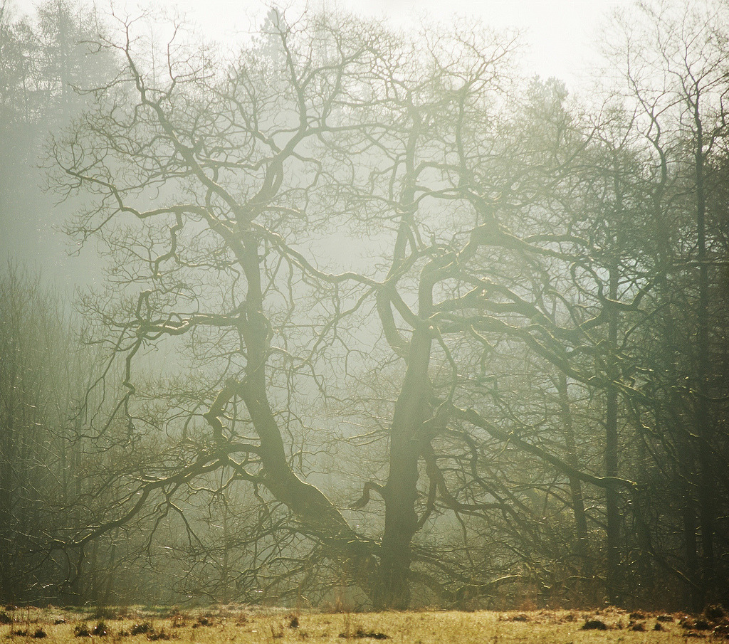 (via All sizes | the bare trees of winter.. | Flickr - Photo Sharing!)