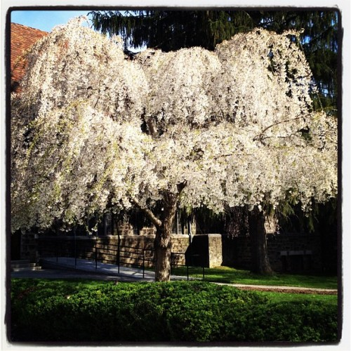 Spring! (Taken with Instagram at Westminster College: Old Main)