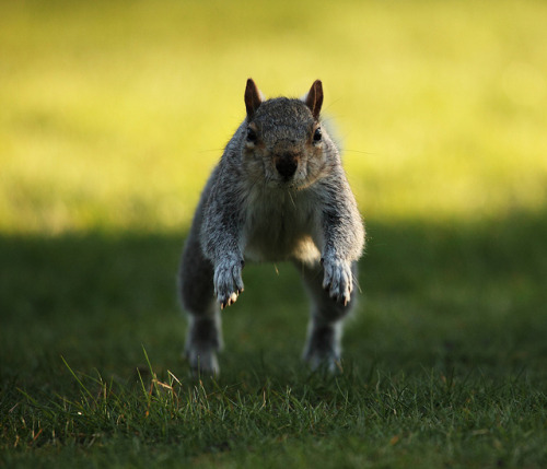 Newest Photos, a set on Flickr.Squirrels in action