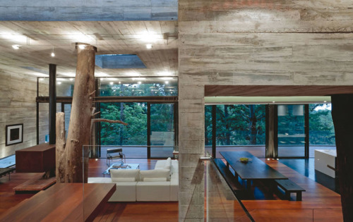 Concrete and old tree inside the house? What more to dream about? (via Looks like good Corallo House by PAZ Arquitectura)