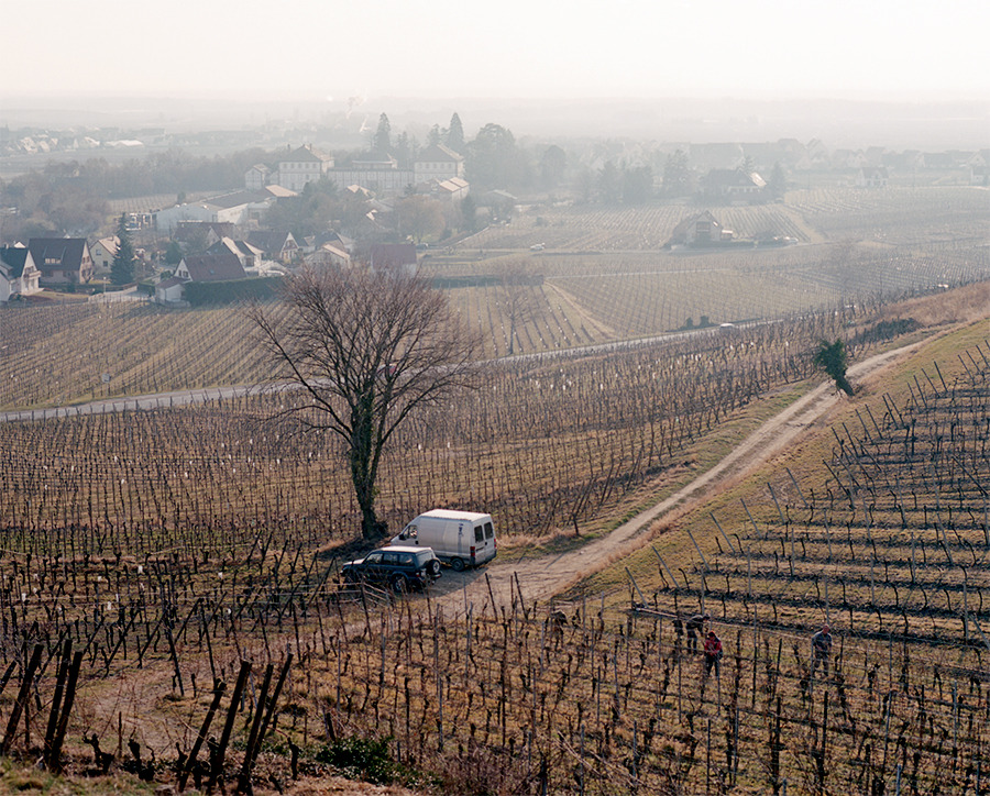 photograph by michaeldavidfriberg:  Vineyards