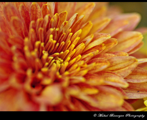 Garden_14 by Mukul Banerjee (www.mukulbanerjee.com) on Flickr.