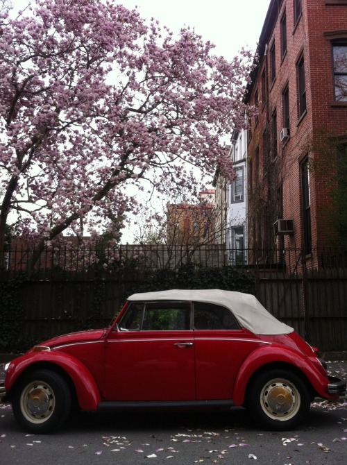 Brooklyn Flower Power