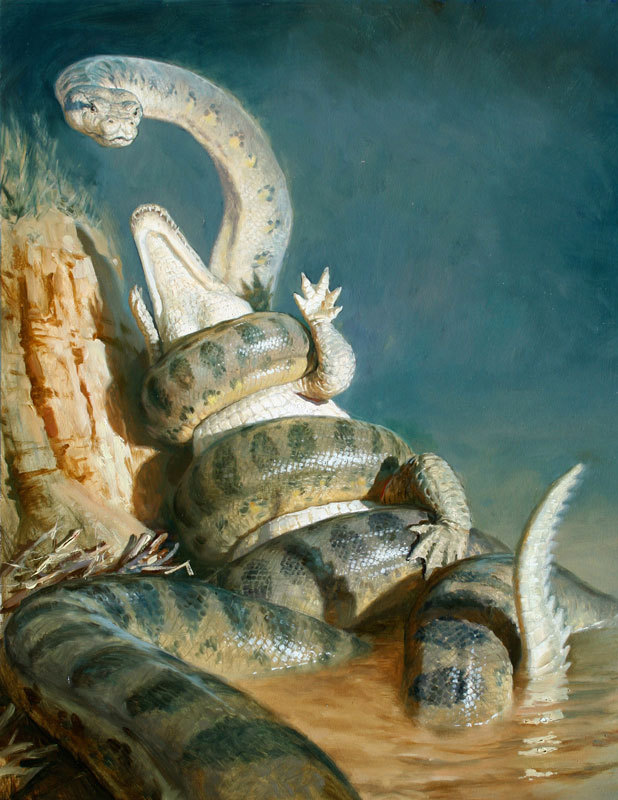 "Titanoboa cerrejonensis by James Gurney | Oil 2009 35.56 x 45.72 cm (14"" x 18"") Private collection. ""With a subject he could neither see nor photograph, Gurney constructed a small maquette scene from oven-hardened clay, rocks, and sticks in a Chinese food takeout container. Challenged by the the snake's extraordinary length, he decided to show the titanoboa rising half out of the water in a death match with a crocodilian, a giant forebear of the modern crocodile. ""The main purpose of my piece is to try to imagine what would otherwise just be a fairly ordinary fossil—to go from that to imagining a very dramatic moment in the life of this creature and to take us in a time machine to see what it really might have looked like,"" says Gurney"". Full article."
