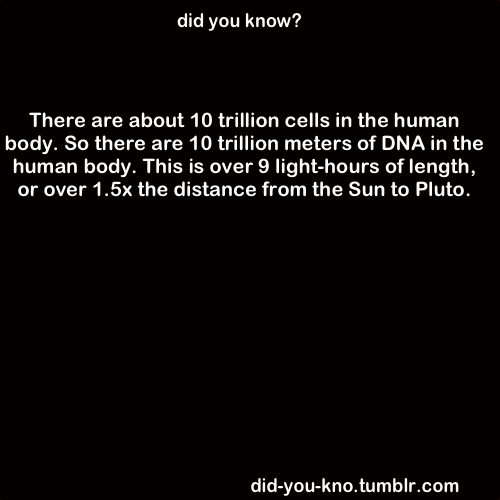 The length of DNA in each human cell is about 1 meter. Source 1, 2