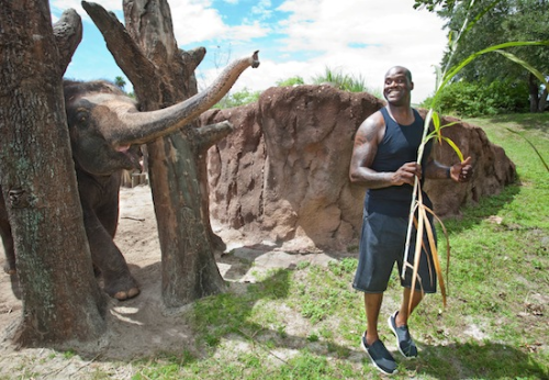 IT'S SHAQ WEDNESDAY!!! One of Shaq's favourite tricks is reminding captive animals that they're prisoners and hungry.  Take that, elephant!!