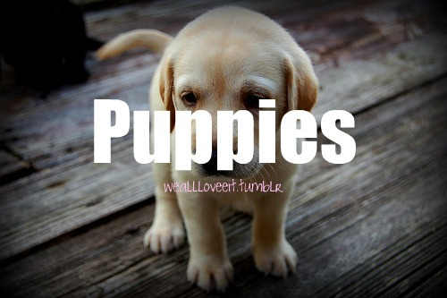 WE ALL LOVE: Puppies Follow: http://weallloveeit.tumblr.com/ :))