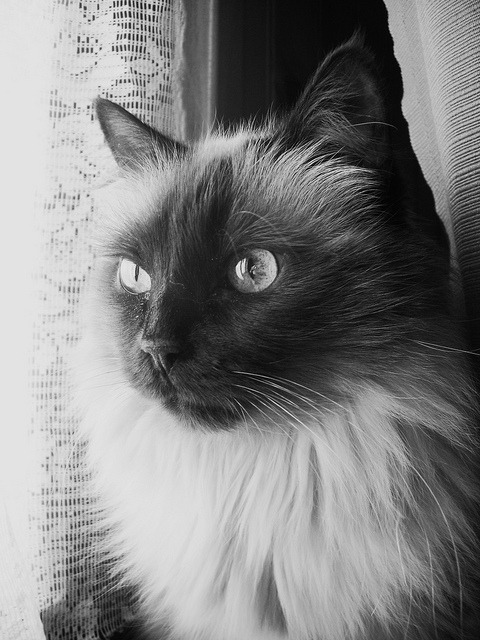 nekogatapusa:  Beauty in b&w by imacatlady on Flickr.