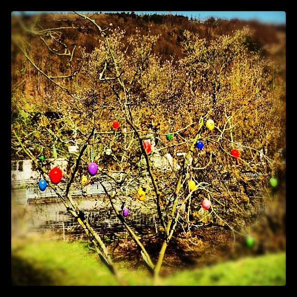 Almost Easter ;) (Taken with Instagram at Graseweg Community)
