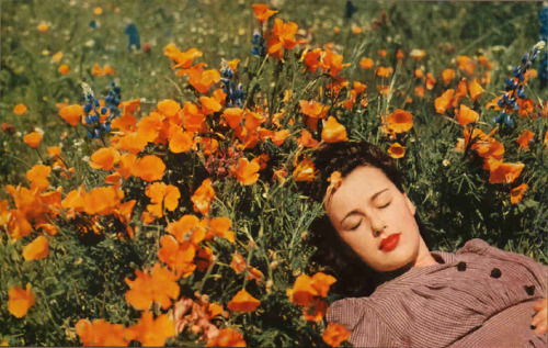 theniftyfifties:  A woman resting amongst the flowers in Central Valley, California, 1954.