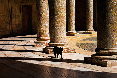 mariusu:  Alhambra Palace Black Cat (by Bruce Poole)  Beautiful, with a lovely little cat ^^