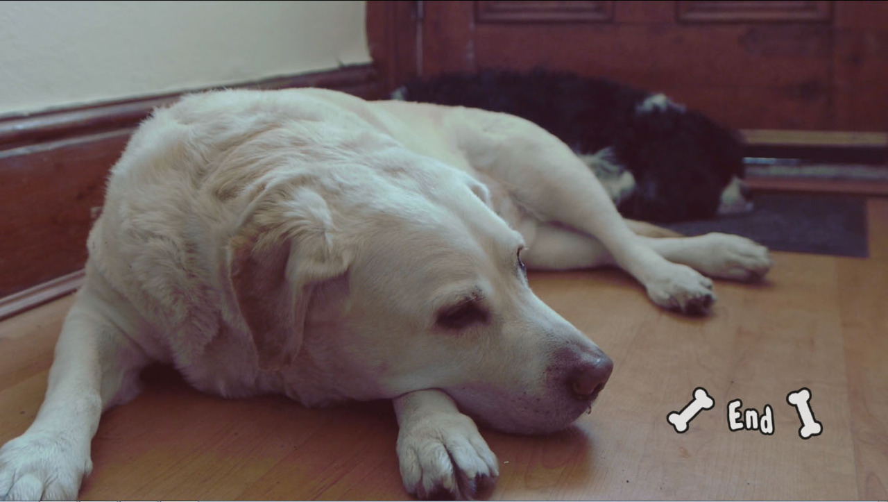 A short video clip about sleepy dogs, Dennis and Billy.  Video Link @ http://youtu.be/U-iLP8yaofMResponse Video @ http://youtu.be/hX66piHYg7E (By Alex Stewart)Specifications: GH2 with Sigma 20mm f/1.8, PremierePro CS5, Music From Youtube.