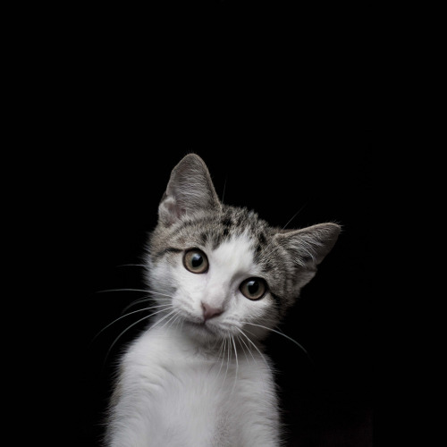 thefluffingtonpost:  PHOTO OP: Why, Hello Via Luís Ferreira.