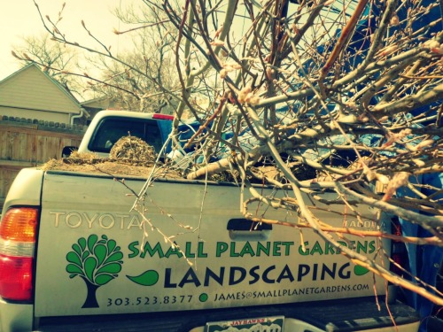 The truck is full of trees!  I love spring cleanup and planting season!
