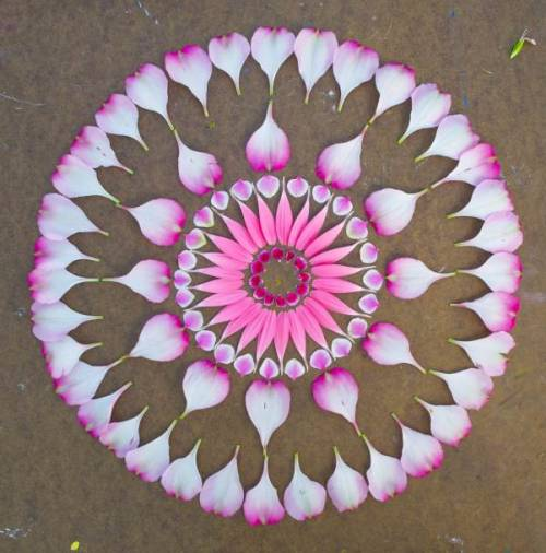 miss-mary-quite-contrary:  The Flower Mandalas are the beautiful art creations of Kathy Klein. click thru to see more