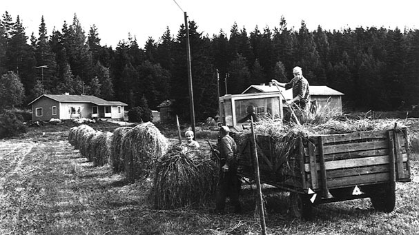 Until the 1950's agriculture was Finland's primary source of livelihood. For its high latitude, Finland has a mild climate, and contains over half of the arable land north of 60*N. It is therefore the northernmost farming country in the world. This began to decline in the latter half of the century when inexpensive grain imports became available and industry took rise.