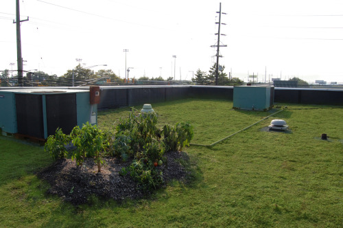 MGV completed the 3,000 sq ft ACUA green roof in just one day.
