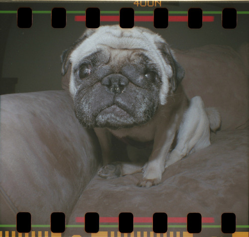 Lily by Edwin Jandro on Flickr.Lily shot with a Diana F+ in Kennebunk, Maine U.S.